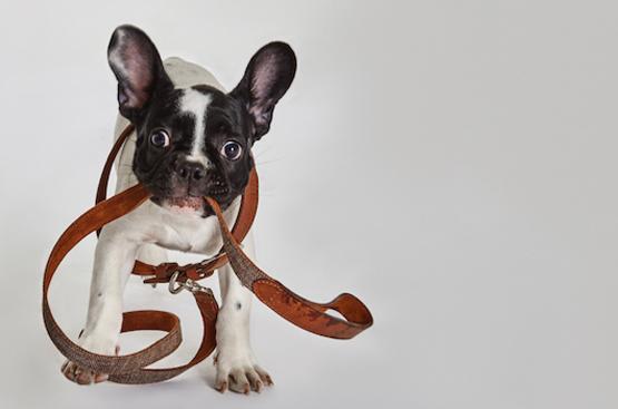 Yargici: Hundeleinen für den guten Zweck
